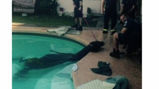Ariz. Crews Rescue Horse from Pool