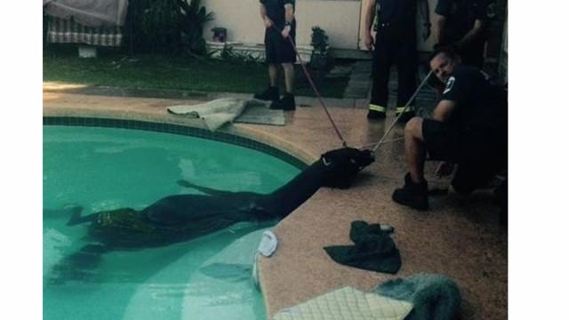 Ariz. Crews Rescue Horse from Pool