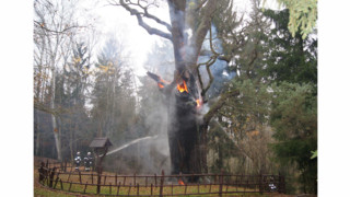 750 Year-old Oak in Poland Damaged by Fire