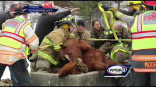 N.H. Firefighters Rescue Horse