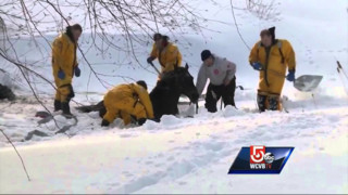 Horse Dug Out of Drift in Mass.
