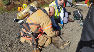 Photo Story: Crews Rescue Cats from Ore. Fire
