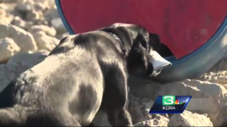 Drill Goes to Dogs in California