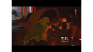 Parrots Yell Help From Burning House