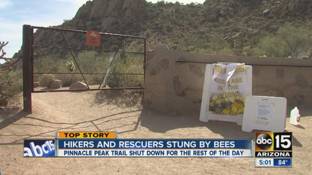Angry Bees Sting Ariz. Rescuers, Hikers