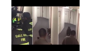 CO Firefighters Lure Bear out of Apartment