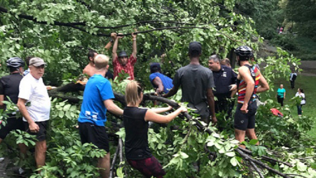 FDNY Frees Woman after Large Tree Falls in Central Park