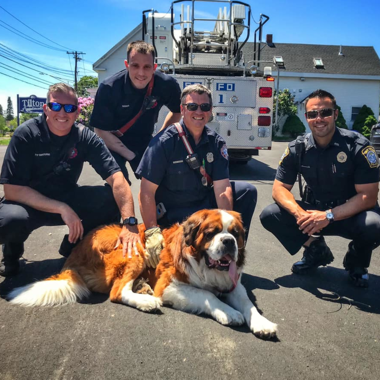 South Portland ME Firefighters Rescue 155-Pound St  Bernard on Roof