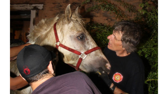 Horse6.jpg_10562398.jpg