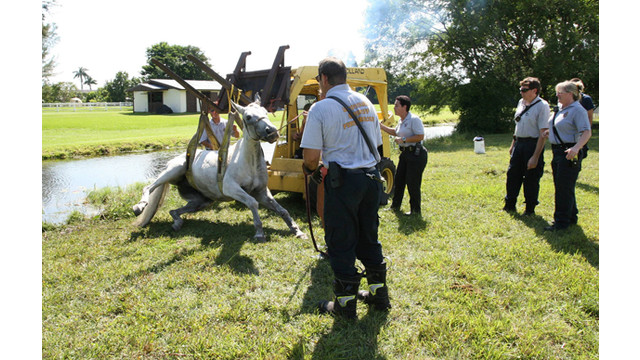 Horse2_10561632.jpg