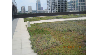 Commercial Construction Considerations: Green Roofs