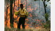 Mexican Firefighters Battle Massive Forest Fire