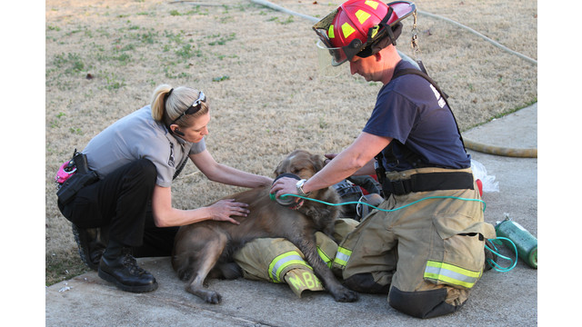 barrow-firefighter-dog-rescue-2.png