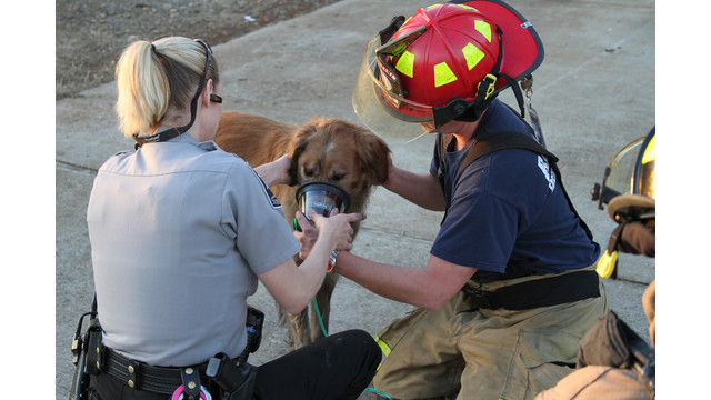 barrow-firefighter-dog-rescue-1.png