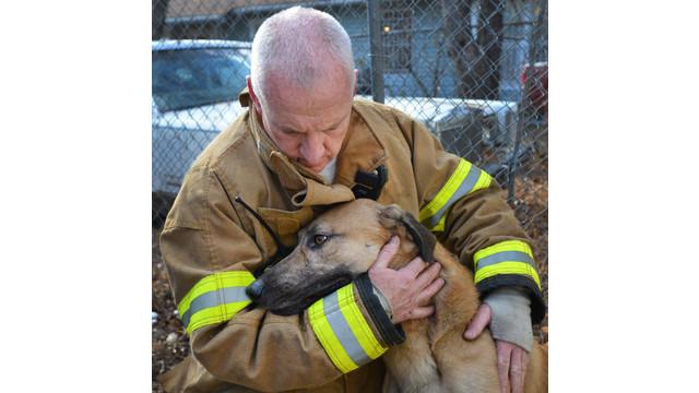 fort-worth-dog-rescue-1.jpg
