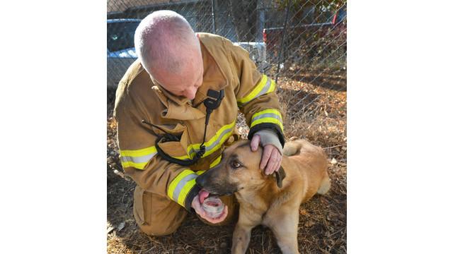 fort-worth-dog-rescue-2.jpg