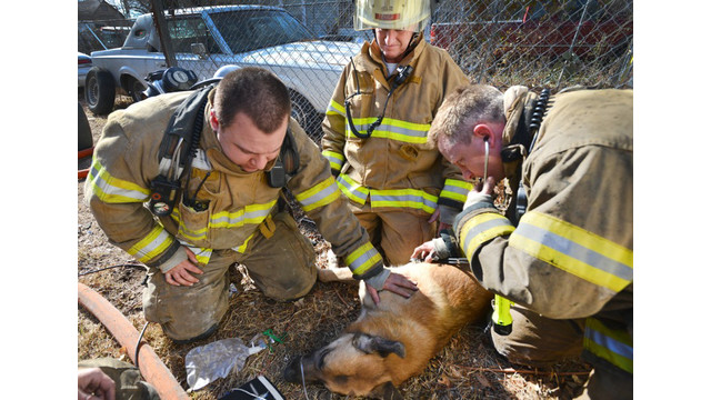 fort-worth-dog-rescue-5.jpg