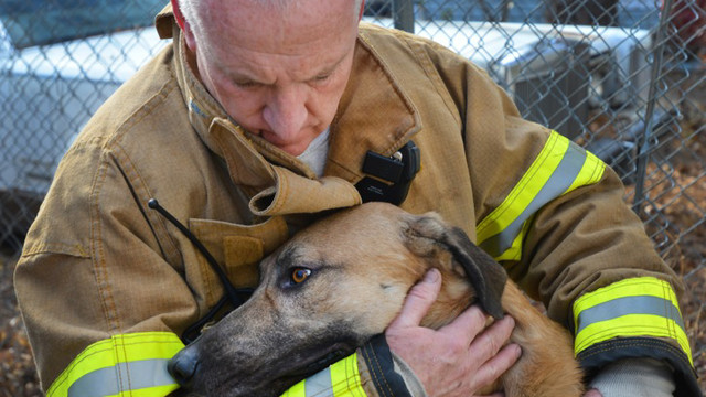 fort-worth-dog-rescue-1.jpg