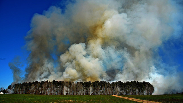 wilson-county-live-contolled-burn-5.jpg