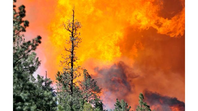Western-Wildfires-NM-2.jpg