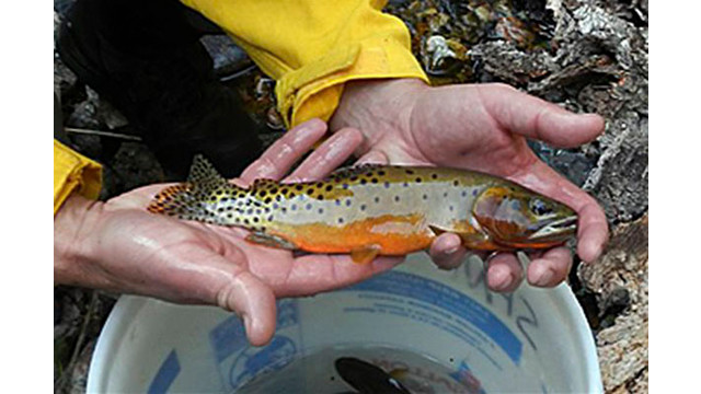 2c0491b2-f7f8-4762-8935-0397b2eaa9d4-Wildfires-Trout-Rescue.sff.jpg