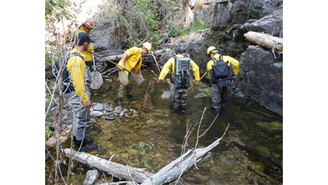 bca026d2-c2c0-49af-b1b6-12b466f4c94e-Wildfires-Trout-Rescue.sff.jpg