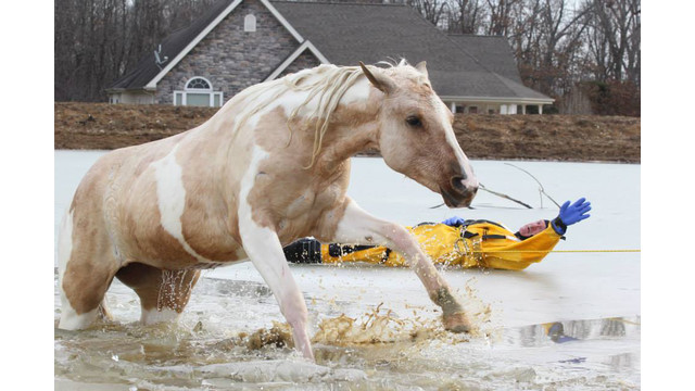 horse-rescue-3.png