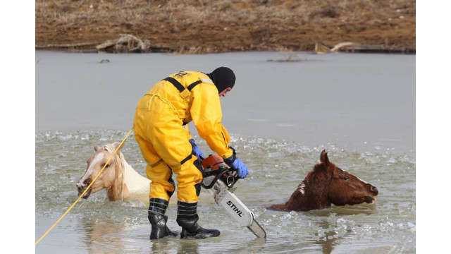 horse-rescue-4.png