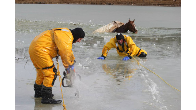 horse-rescue-5.png