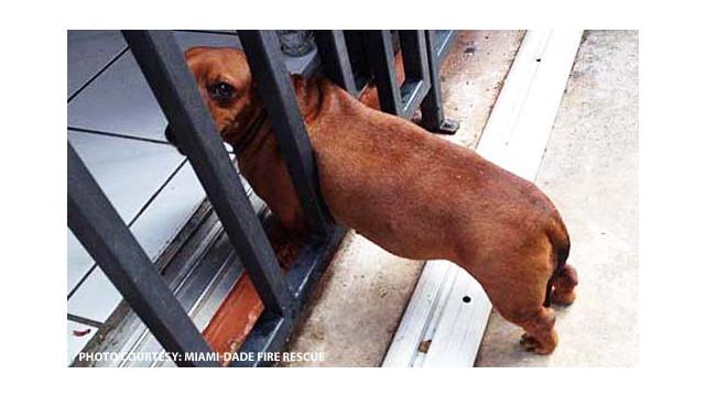 dog-caught.jpg