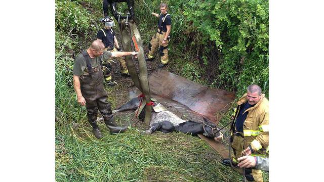 Horse-Rescue-Webf.jpg